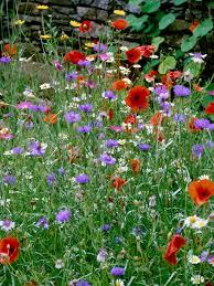 Small Picture Wildflower Gardening HGTV