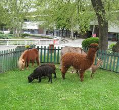 """Résultat de recherche d'images pour """"image animaux miniatures"""""""