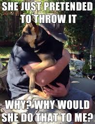 Top 30 Very Funny Animals Memes | animals | Pinterest via Relatably.com
