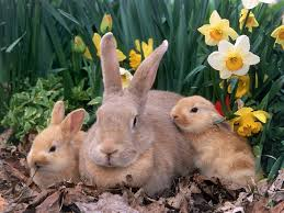 Image result for Easter bunnies