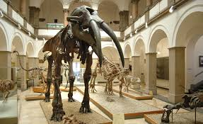 Image result for museum