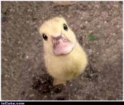 Hello Cute Duckling! Meme Generator - Captionator Caption ... via Relatably.com