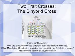 What is a Dihybrid Cross  SlidePlayer