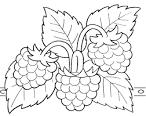 Картинки раскраски ягоды и фрукты