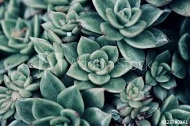 mexican typical plant summer pattern, <b>green cactus</b>, <b>aloe</b>, succulent ...
