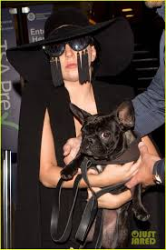 best images about celebrity pets pets photo lady gaga s painful childhood is detailed in her mom s essay photo lady gaga carries her dog asia in her arms while arriving at lax airport in an all black