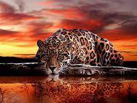 леопард: лучшие изображения (<b>21</b>) | Big cats, Jaguar и Wild animals