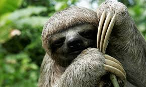 Why are <b>sloths</b> slow? And six other <b>sloth</b> facts | Stories | WWF