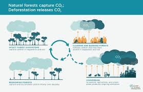 why forests why now a preview of the science economics and natural forests capture co2 deforestation releases co2