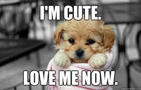 I'm cute. Love me now. - Hehe cute - quickmeme via Relatably.com