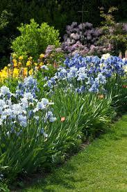 Growing Irises – Planting & Caring for <b>Iris Flowers</b> | Garden Design