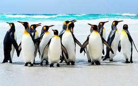 Resultado de imagen para pinguinos
