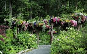 The Upside-Down <b>Forest</b> of Glacier Gardens – Juneau, Alaska ...