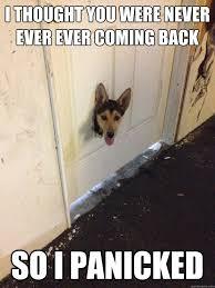 I thought you were never ever ever coming back So i panicked ... via Relatably.com