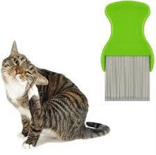 2019 <b>Pets Dogs Comb</b> For <b>Nits</b> Lice Pocket <b>Pet</b> Grooming <b>Comb</b> Get ...