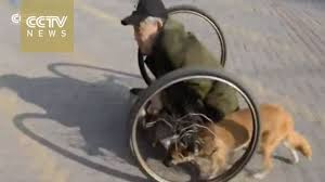 Heartfelt: <b>loyal dog</b> pushes the wheels for disabled beggar! - YouTube