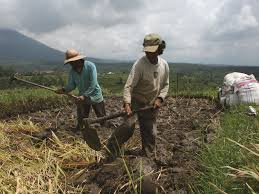 Image result for small scale agriculture
