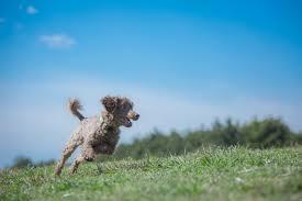 「無料画像 犬公園散歩」の画像検索結果