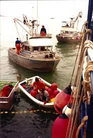 images about old fishing pictures circle of randy hartnell fishing partners working to save a 125 ton herring set in togiak