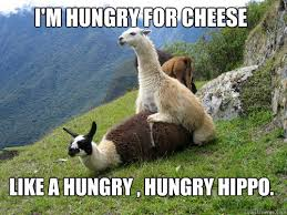 like a hungry , hungry hippo. I'm hungry for cheese - llamalla ... via Relatably.com