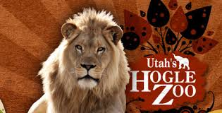 Image result for utah's hogle zoo