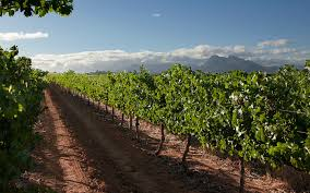 essay essay wines