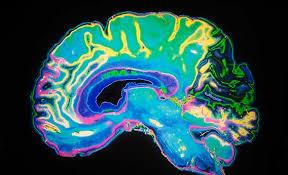 نتیجه تصویری برای brain and pornography