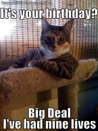 Funny Happy Birthday Cat Meme & Grumpy Cat   Why Are You Stupid? via Relatably.com