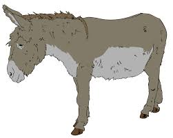 benjamin animal farm donkeys live a long time none of you has ever seen a dead donkey