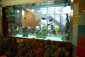 this wall divider aquarium is a great example of how elements outside the aquarium can enhance its look aquarium office