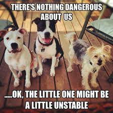 Theres nothing dangerous about us - dog meme   Funny Dirty Adult ... via Relatably.com