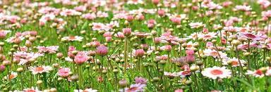 Resultado de imagen de Prados con flores