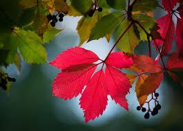 Resultat d'imatges de paisajes de otoño