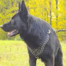 <b>Мягкая шлея</b> из черной кожи для немецкой овчарки «Armor-Lux ...