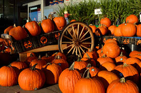 Image result for halloween pic