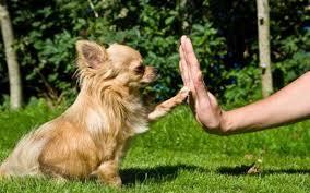Какое <b>лакомство для собак</b> при дрессировке лучше всего ...