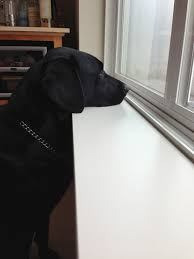 i just referred you to yellow dog consulting no need to wait they ll come to you when ready