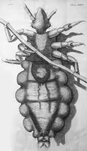 Image result for robert hooke micrographia