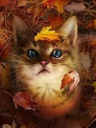 Image result for happy weekend autumn cat