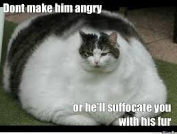 Meme on Pinterest | Fat Cats, Tags and Cat Memes via Relatably.com