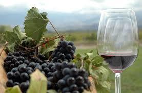 Resultado de imagen de viñedos y vino