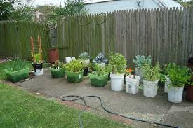 Small Picture Best Ideas Vegetable Gardening in Florida for Beginners Home