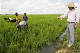 Résultats de recherche d'images pour «terres arables en afrique photo»