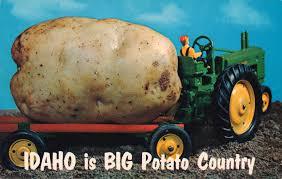 exaggeration postcard roundup big potato country postcard