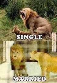 FunnyMemes.com • Funny memes - Single lion Married lion via Relatably.com