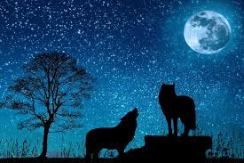 Do <b>wolves</b> really <b>howl</b> at the <b>moon</b>?