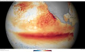 el ni ntilde o and the gal aacute pagos noaa gov the change in water temperatures can affect the marine life directly upwelling from the equatorial undercurrent for instance is reduced during an el nintildeo