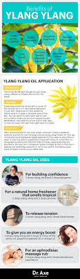 best images about zija essential oil blends cheat sheet to the benefits of ylang ylang essential oil purasentials