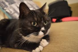 Should your <b>cat</b> get to go <b>outside</b>?