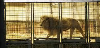 Tory MP Continues to <b>Block</b> Ban on <b>Wild</b>-<b>Animal</b> Circuses